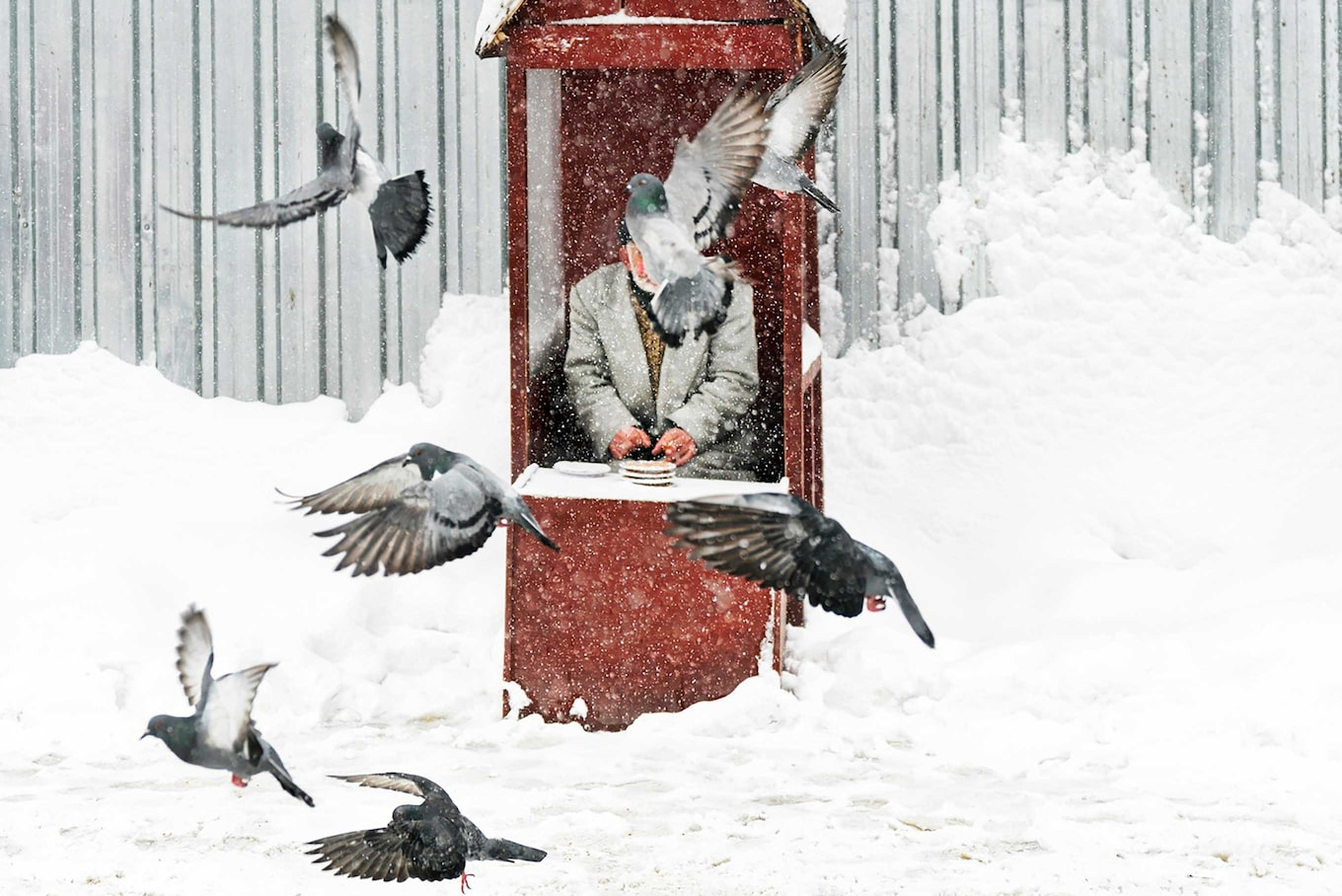 murat-pulat-sony-alpha-7SII-old-man-sits-in-snowy-shelter-as-birds-fly-in-front-of-him