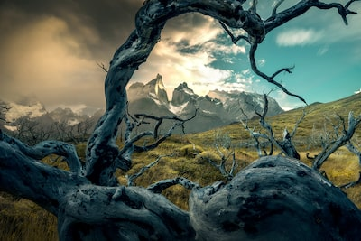 ilhan-eroglu-sony-alpha-7RIII-gnarled-tree-branches-on-mountainside-with-stormy-skies-behind