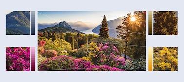 Images de fleurs des montagnes avec la technologie Object-based HDR Remaster