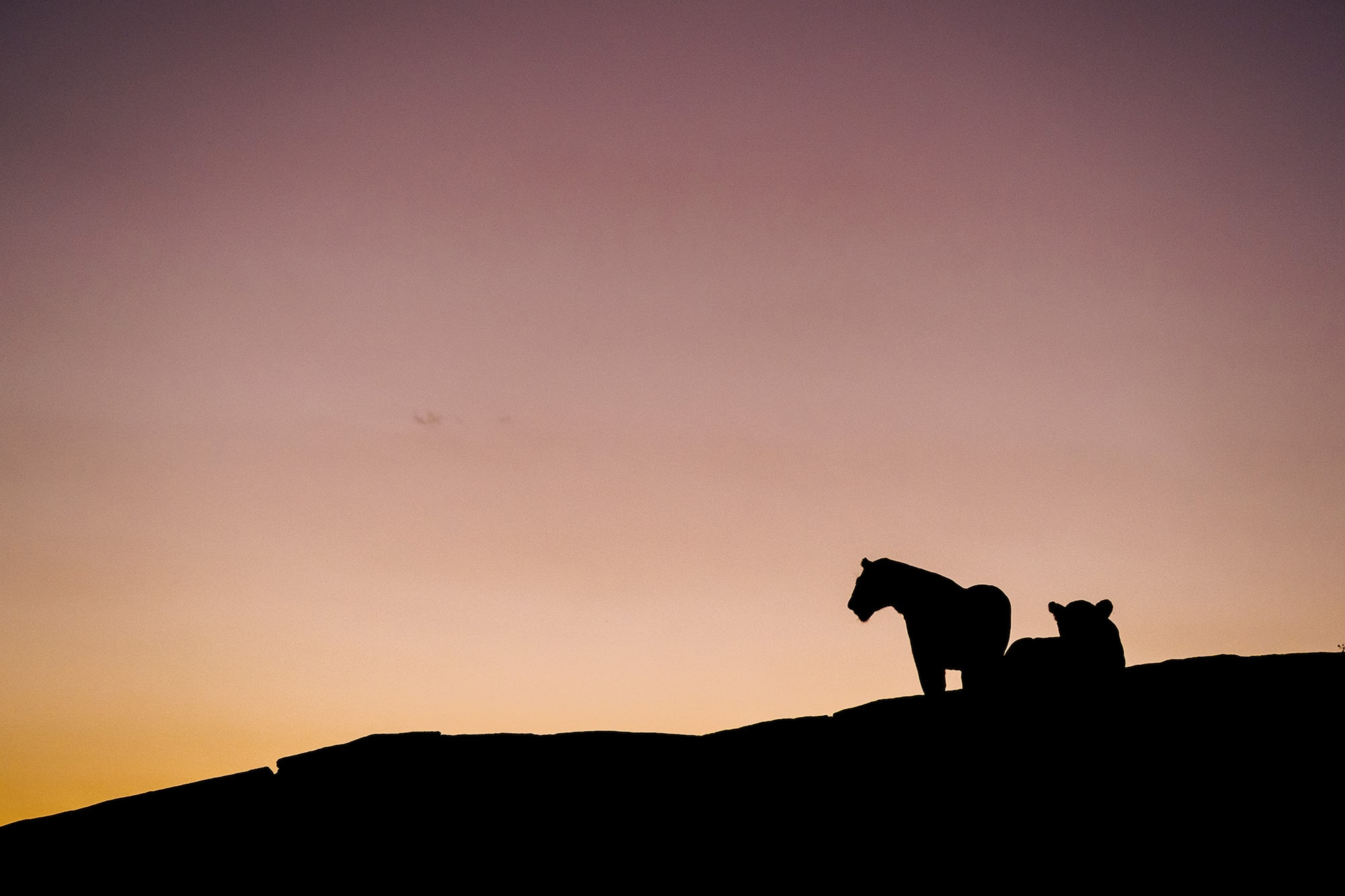 chris-schmid-sony-alpha-9-silhouetted-lions-at-black-rock-in-the-masai-mara-at-dawn
