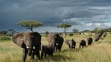 Chris-Schmid-troupeau-d-elephants-en-marche-tanzanie