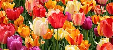 Détails de fleurs illustrant les nuances et tons subtils des pétales